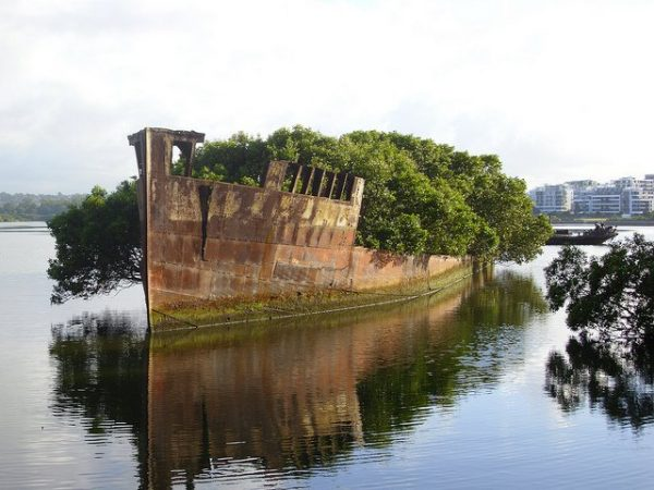 The SS Ayrfield Lives In An Abandoned Shipyard That Has Became A Beautiful Ocean Forest