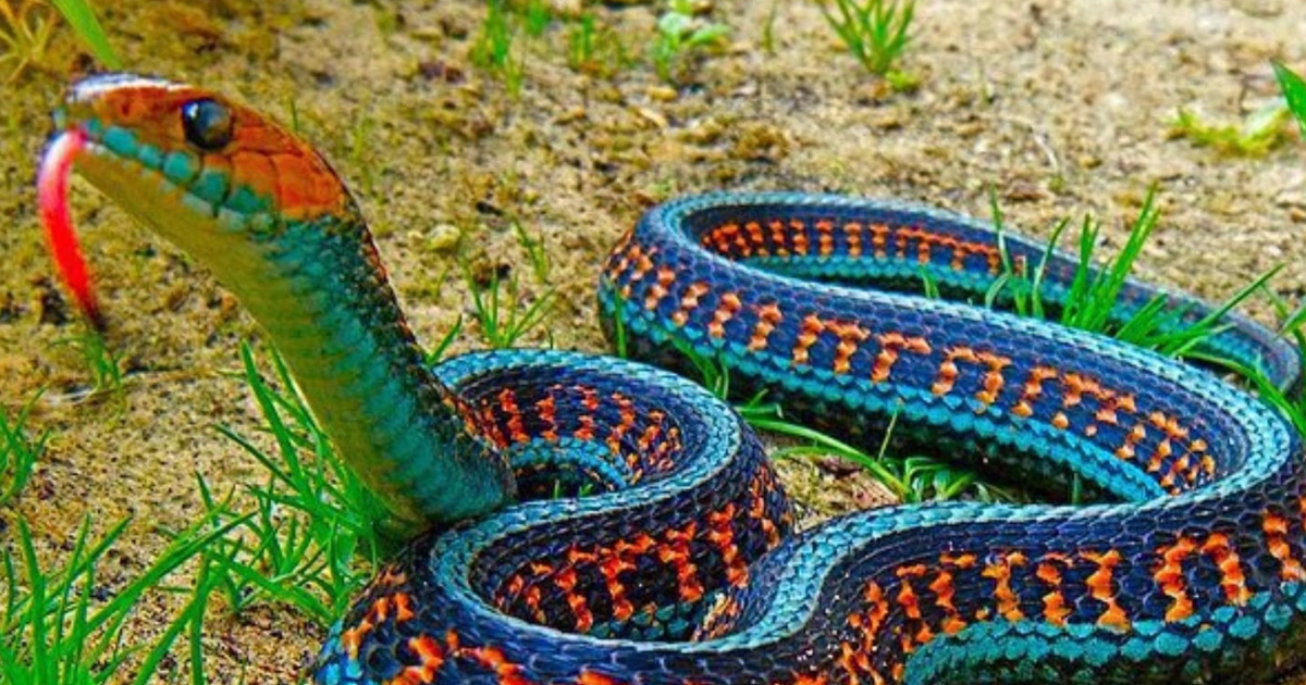 Deadliest Snakes The Most Dangerous Ever Found On The Planet